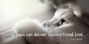 Small paws can deliver unconditional love.